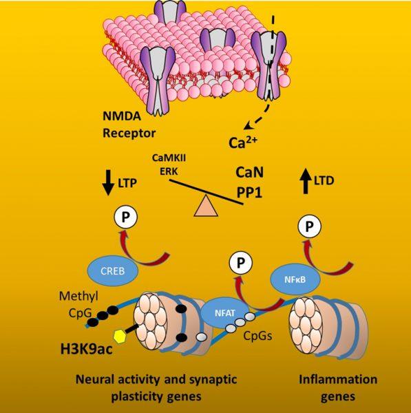 epigenetics 2